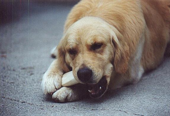 chewsonbone.jpg